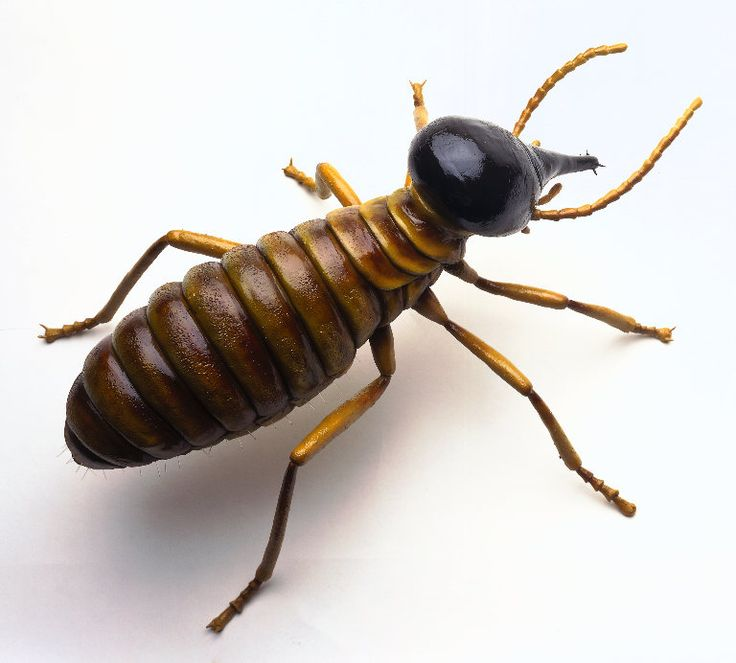 Mourier Pest Control will protect your house and your property against termites.
