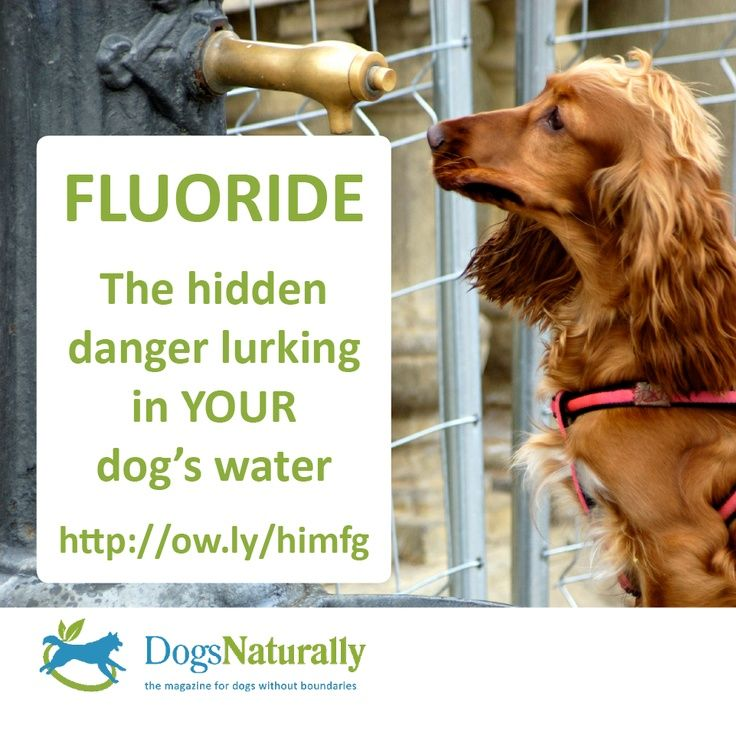 Fluoride Dangers: What's In Your Pet's Water? Fluoride is a Class 2 environmental toxin, second only to arsenic in its danger as a biochemically reactive poison. Fluoride's primary use is as a rat and cockroach poison and it is a known carcinogen. Historically, fluoride was also used in Nazi Germany ghettos and prison camps to sterilize the human inmates.  www.dogsnaturallymagazine.com/fluoride-pets-water/