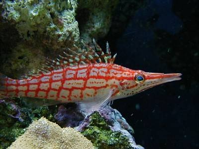 Awesome Beginner Fish For A Saltwater Aquarium Aquariums