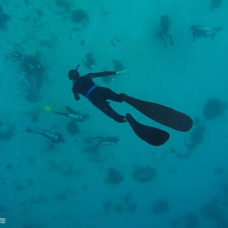 """""""Scuba bellow me"""" Uber Freediving Komodo offers SSI Level 1 & 2 courses, training line dives and fun dives. Contact us for more information!  uberscubakomodo.com/freediving  #uberfreedive #freedivingcourse #freediver #ssi #komodonationalpark #labuanbajo #flores #gopro #underwaterphotography #freedivers #freediving #underwater #fun #uberscubakomodo #komodo #komodonationalpark #breathhold #apnea #adventure #apneafreedivingphotography #waterworld #saltlife #photooftheday #fitspo #indonesia"""