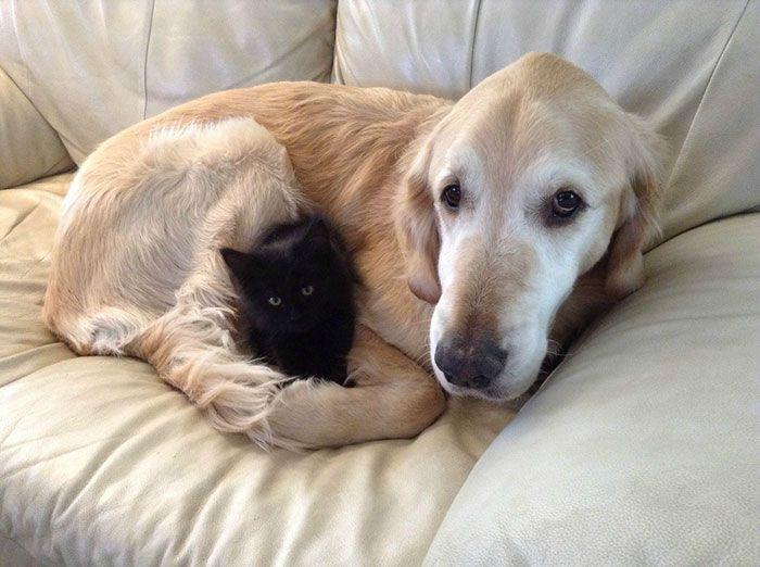 Quand un adorable chaton noir aide un chien endeuillé à remonter la pente