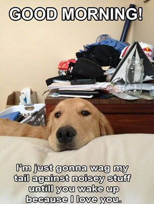 I love dogs's photo: I get this in stereo every morning.
