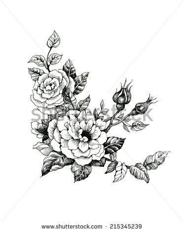 Ilustração de flores de rosas de aguarela em ilustração vetorial preto e branco