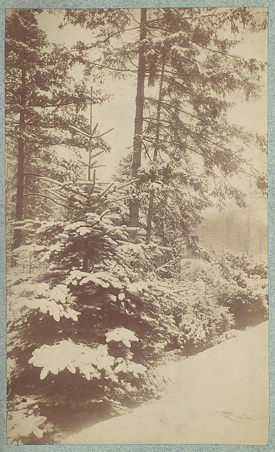Unknown, American. [Pines in Snow], 1880s–90s. The Metropolitan Museum of Art, New York. Gift of Mrs. Robert Ingersoll Aitken, 1951 (51.611.503)
