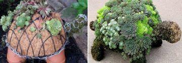 Eine Schildkröte aus Fettpflanzen ist in jedem Garten EINZIGARTIG! Entdecken Sie schnell, wie es geht…