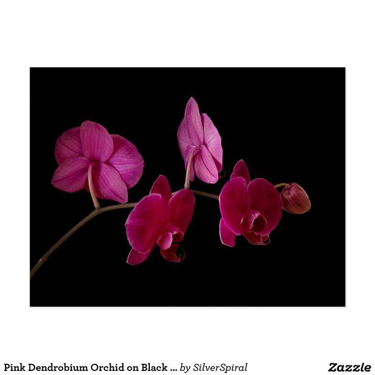 Orchidée rose de Dendrobium sur le noir - Carte Postale