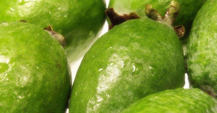 Diferentes propiedades de la guayaba. La guayaba es una fruta común en la India y en todo el mundo en climas cálidos. De forma similar a una pera, son de color verde claro en el exterior y rosa por dentro. Alineada con las semillas, los frutos de color rosa son jugosos y dulces. Las personas y los animales comen guayaba y su jugo es muy popular en lugares como Hawái. Esta deliciosa ...