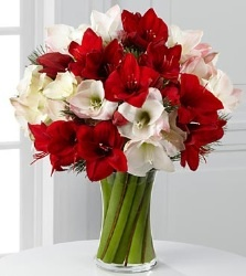 Amaryllis bouquet red and white themed wedding #winterwedding