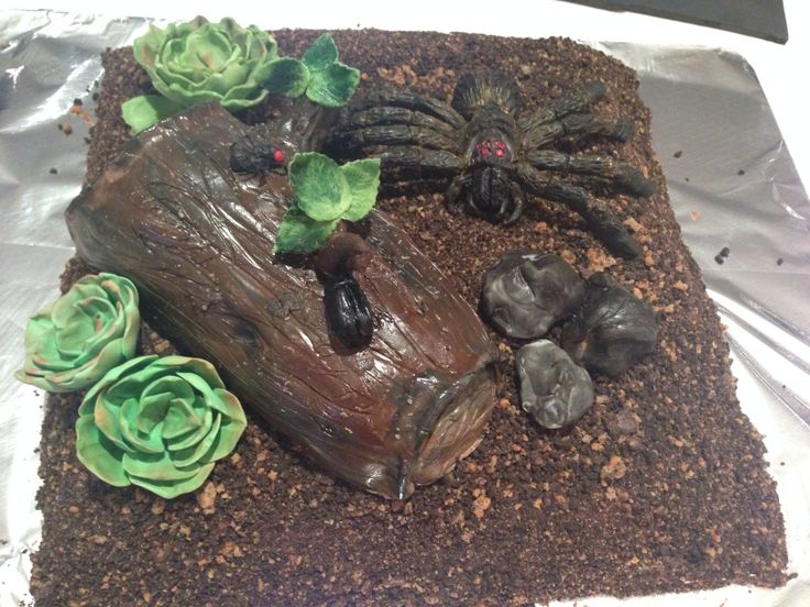 Cake of Spider insect habitats with log and rocks for my niece ... Yes not nephew
