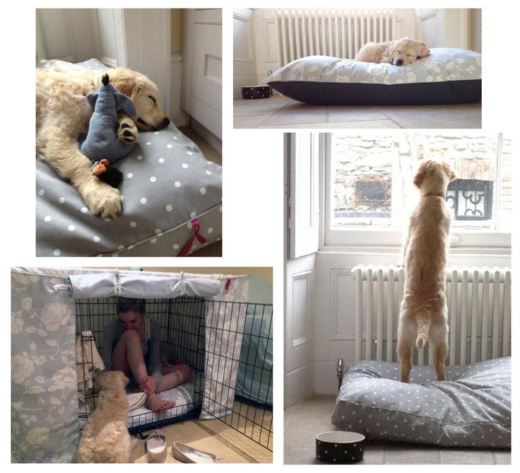 Darcy with his 'many' Hugo & Hennie Beds! #HugoandHennie