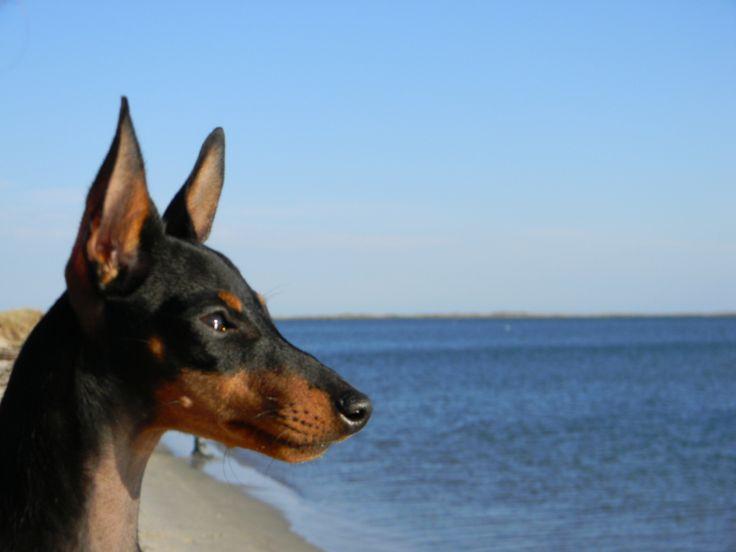 All sizes | Bullitt, surveying the ocean | Flickr - Photo Sharing!