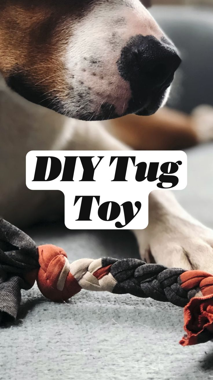 Human Babies, Old T Shirts, Work From Home Moms, Pet Beds, Pet Health, Dog Accessories, Toddler Crafts, Dog Friends, Pet Care