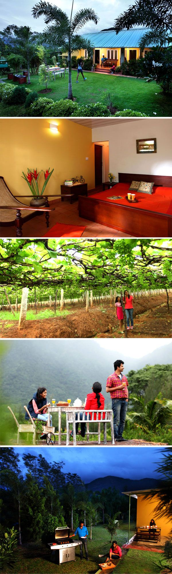 India Travel : Farmstay in Thekkady. It is a beautiful valley with luxurious green fields and Organic Farm near Thekkady, you simply cannot miss the lush paddy, swaying coconut trees, vineyards bursting with green gems and the beautiful vegetables and spice plantation that are around year long