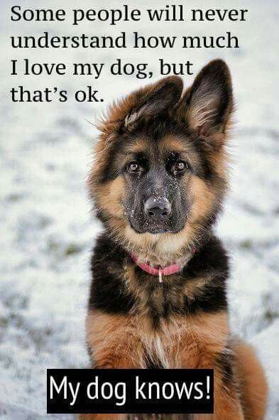 """""""Some people will never understand how much I love my dog, but that's OK. My dog knows."""""""
