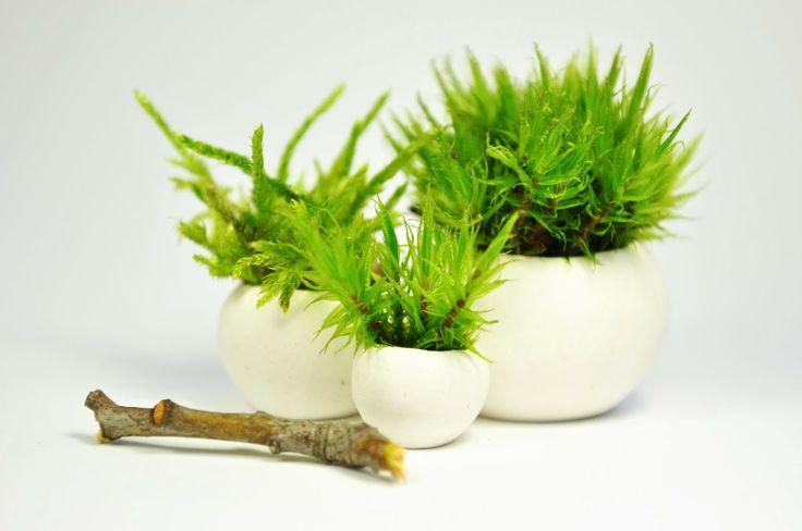 moss miniature