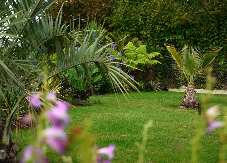 Les 549 meilleures images du tableau Jardin que j\'adore sur ...