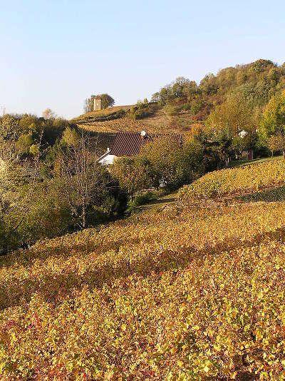 Arbois le vignoble route des vins du jura guide du tourisme du jura