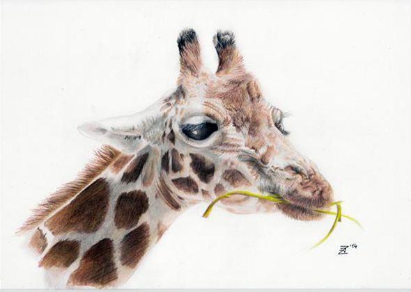 Потрясающие рисунки цветными карандашами