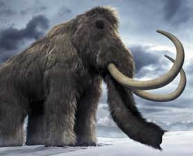 A Russian boy found the best preserved wooly mammoth in a hundred years.