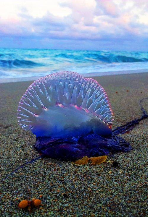 Jelly fish stings hurt so badly. They look pretty. Looks can be deceiving. LO