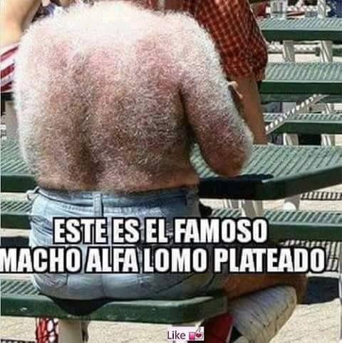 ★★★★★ Memes en español chistosos para facebook: Macho alfa lomo plateado I➨…