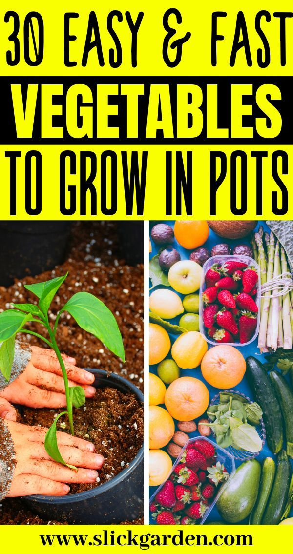 30 Easy And Fast Vegetables To Grow In Pots Lettuce Is One Of The