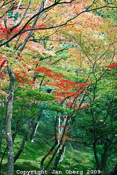 Ginkaku-ji # 1 2012