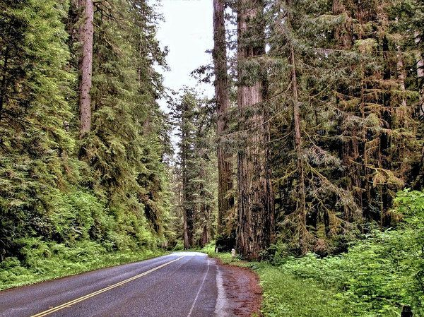 Traveling Through A Redwood Forest - California Art Print by John Trommer.  All prints are professionally printed, packaged, and shipped within 3 - 4 business days. Choose from multiple sizes and hundreds of frame and mat options.