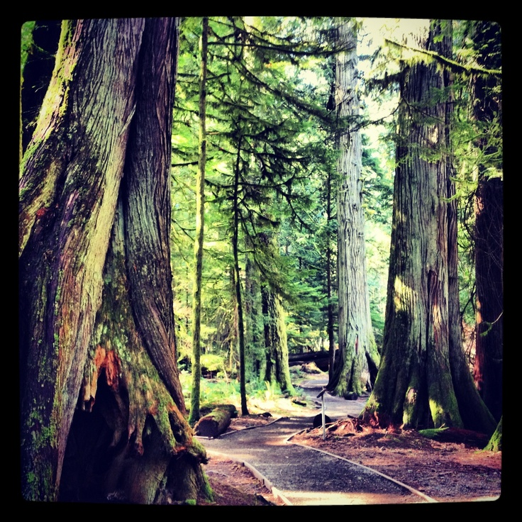 Cathedral Grove -Vancouver Island ---- I think it's time to go back, it's been 17 years and I still clearly remember this place.. Through the eyes of an 11 year old.