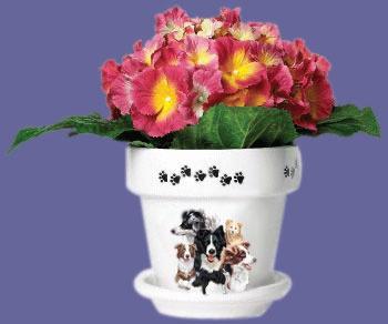 Border Collie Porcelain Flower Pot, For All The Dog Lovers. $21.95.