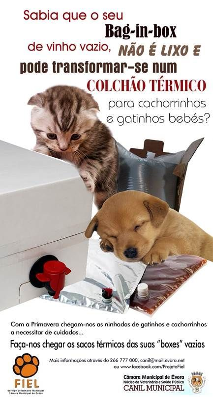 Sabia que o seu Bag-in-Box de vinho vazio, não é lixo e pode transformar-se num Colchão Térmico para cachorrinhos e gatinhos bebés?