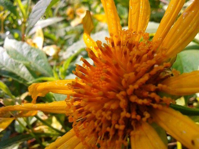 #sunflower #flower