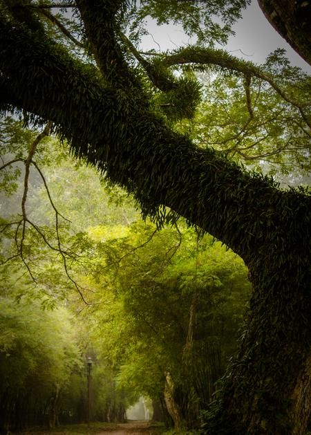 the green Photo by alfred chaniago — National Geographic Your Shot
