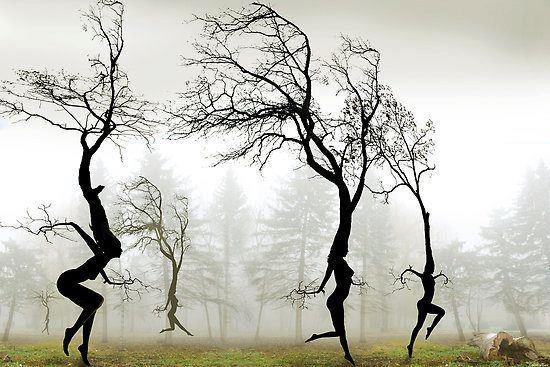 Dancing Trees | Igor Zenin