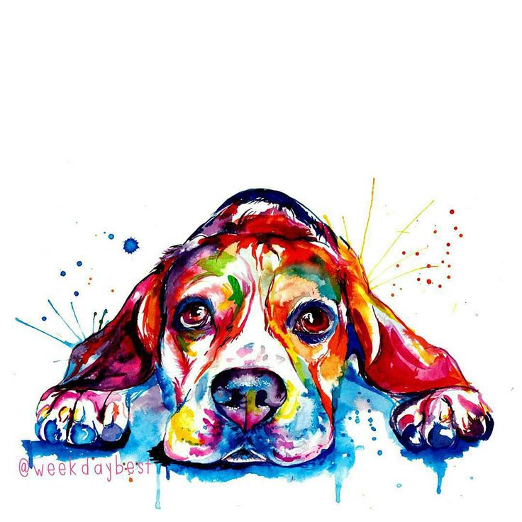 """"""" Thank you so much @weekdaybest for this pawtastic watercolor art. We love it so much! Go to @weekdaybest and discover her pawsome paintings! I'm sure…"""""""