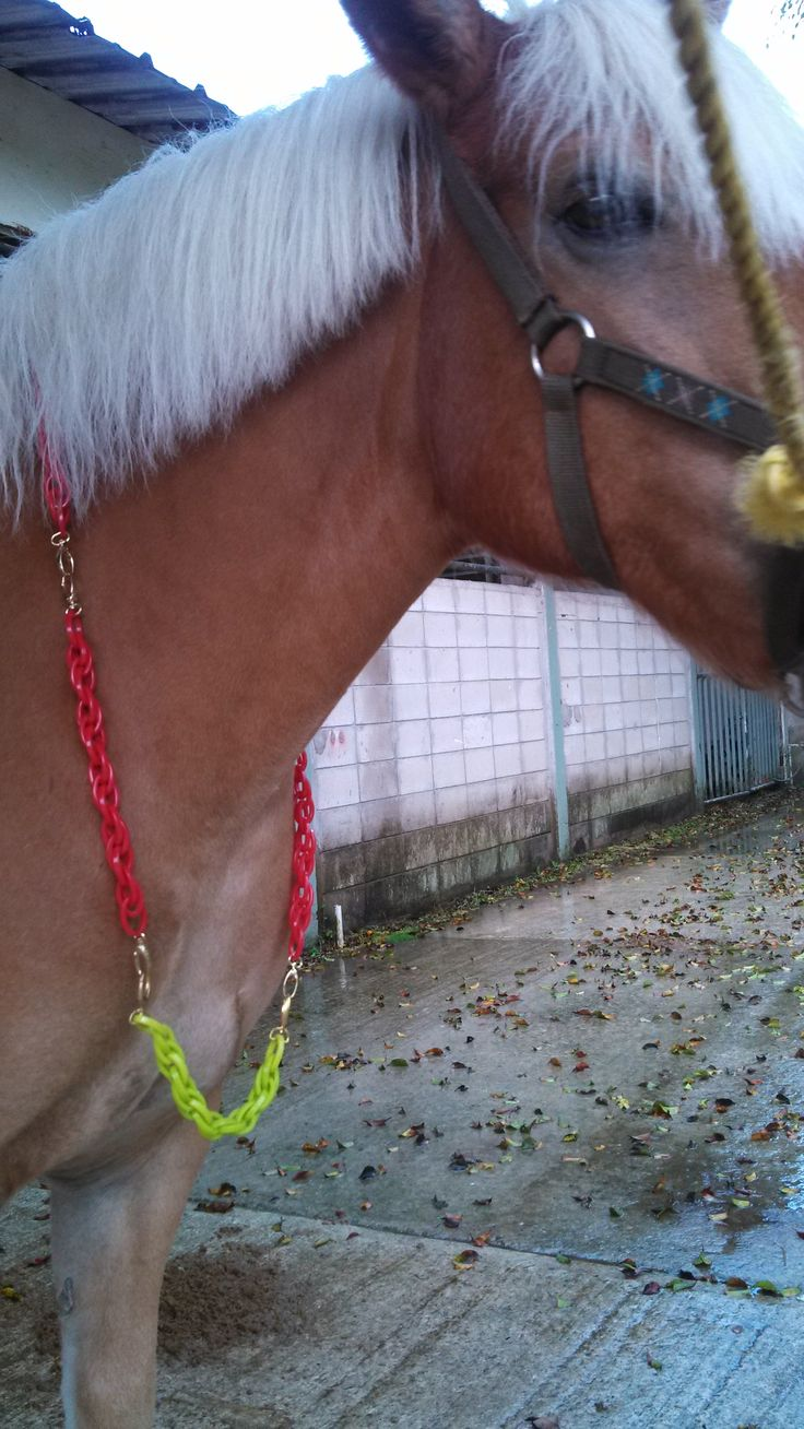 @ hippotherapy, @ equine assisted therapy