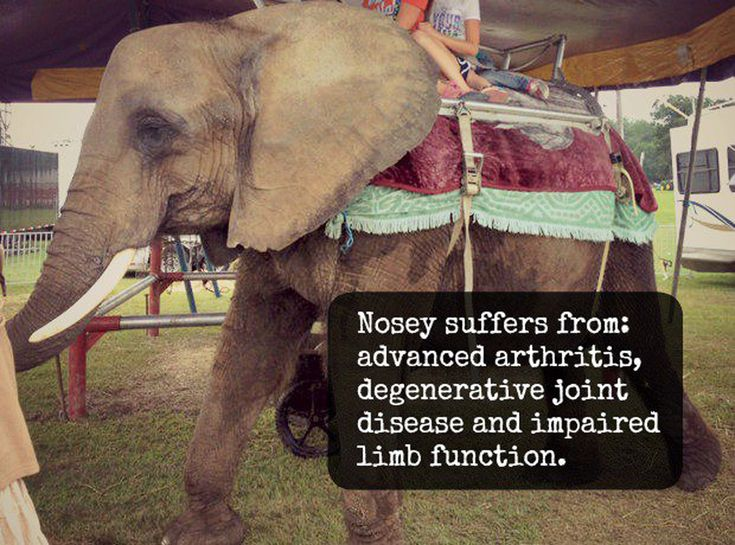 Best NOSEYSAVE OUR WILDLIFE Images On Pinterest Wildlife - Animal abusers will finally registered just like happens sex offenders