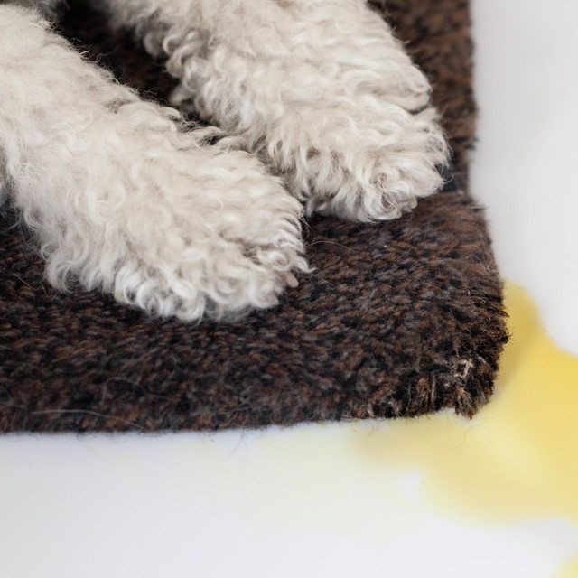 Dog Smell Of Rug: 27 Best Images About Pet Care On Pinterest