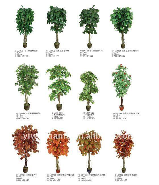 Nombres de plantas de arboles imagui flores y plantas - Clase de flores y sus nombres ...