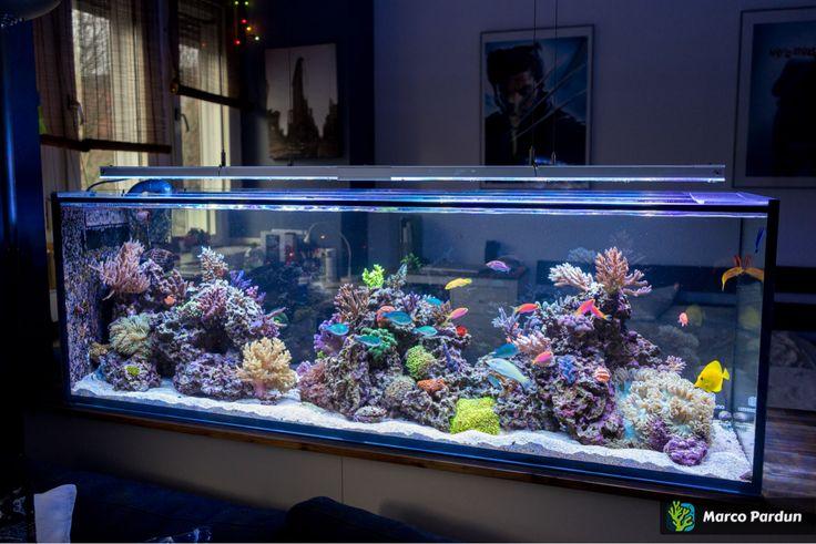 die besten 25 aquarium raumteiler ideen auf pinterest wandaquarium aquarium und eingebautes. Black Bedroom Furniture Sets. Home Design Ideas