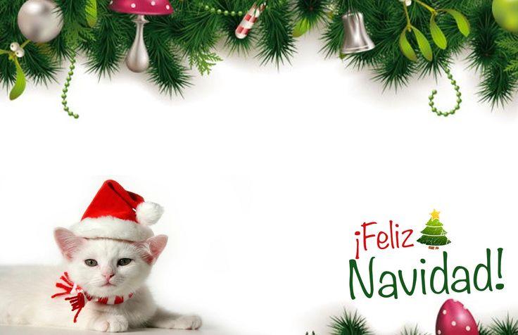 #Tarjeta de #Navidad #Gato Blanco y su Blanca Navidad #kitty #kittycat #christmas #cards #free #greetings #greetingsfree http://bit.ly/11c95L3