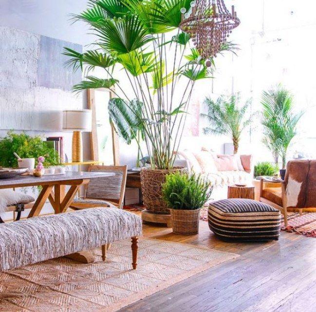 emejing dekorative pflanzen fürs wohnzimmer images, Wohnzimmer dekoo