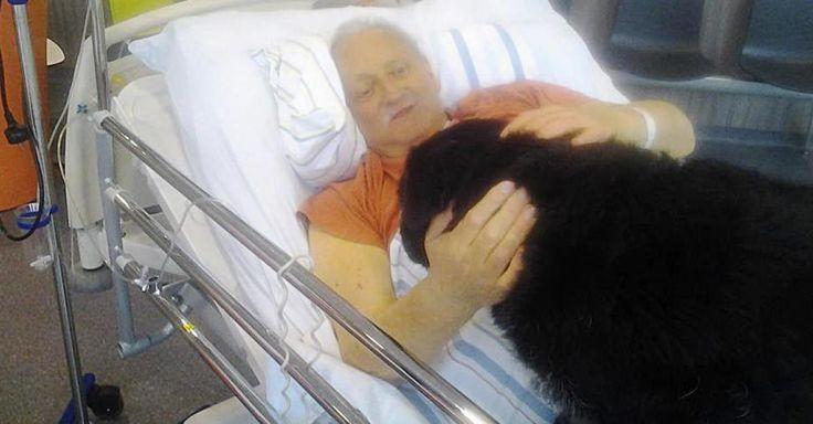 #Huy: hospitalisé en phase terminale au CHRH, ce Marchinois sexagénaire a pu dire adieu à son chien - La Meuse: La Meuse Huy: hospitalisé…