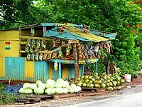 Treasure Tours Jamaica Island Tours and Airport Transportation from Treasure Beach Jamaica