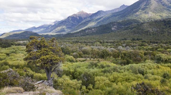 Udsigt over Alerces National Park i Argentina
