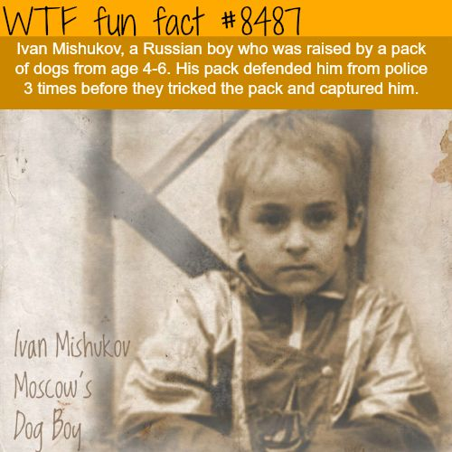 Dog Boy - WTF fun facts