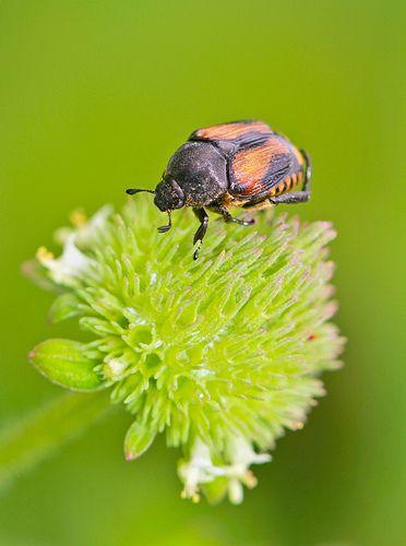 September 05, 2013 - Bug 003 Small