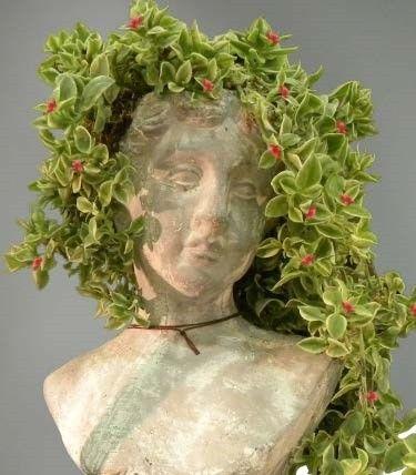 Baby Sunrose (Aptenia cordifolia):