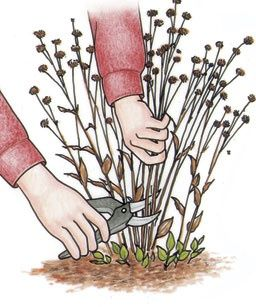 Late winter/early spring checklist for prepping the gardens...
