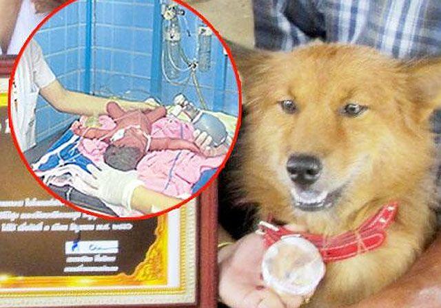 Szájában egy szemetes zsákkal rohant haza az izgatott kutya. Azóta hősként tisztelik! - Kedvencek - Kikapcsolódás - www.kiskegyed.hu
